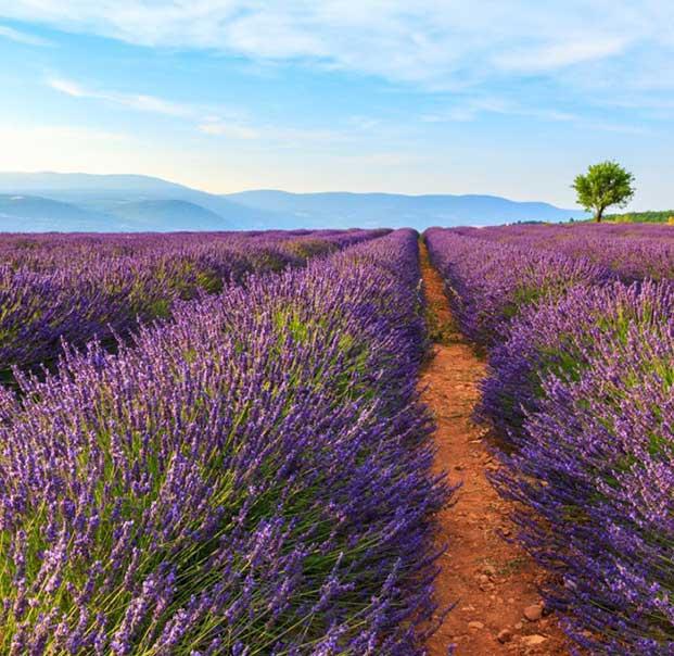 Provence3
